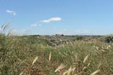 Sicile, site archéologique de Selinunte - 221848640