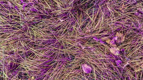 autumn texture grass - 221855273