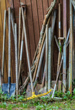 Old tools to work in the garden. - 221873017