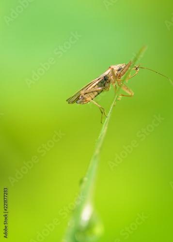 Leinwandbild Motiv the bedbug sits on a leaf.