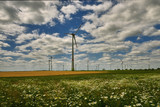 Cultivated fields with matured cereals, and on them windmills producing green energy - Germany, Maklemburg - 221884091