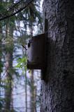 Budka dla ptaków w Dolinie Kościeliskiej - 221884667