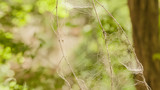 spider web on a green background - 221886438