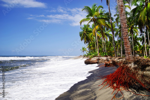 Wild caribbean beach landscape