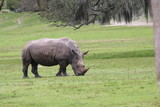 Rhino - 221903875