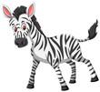 Cute zebra white background