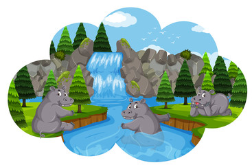 Hippos playing in waterfall