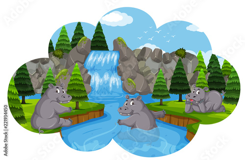 Hippos playing in waterfall - 221934450