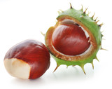 Horse chestnuts - 221946089