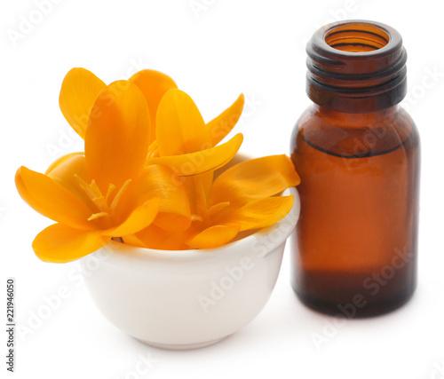Żółte krokusy lub szafran z olejkiem eterycznym