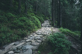 Rocky hiking path through green summer forest in mountains - 221951499