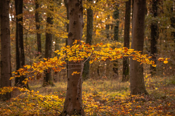 In the mountain forest in autumn