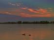 Leinwanddruck Bild - Sonnenuntergang,Möwen,Enten,Wasservögel auf der Müritz,Waren Müritz