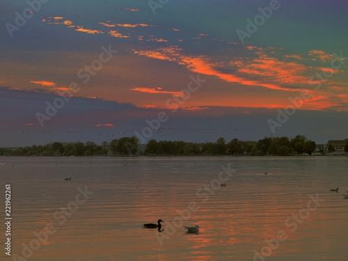 Leinwanddruck Bild Sonnenuntergang,Möwen,Enten,Wasservögel auf der Müritz,Waren Müritz