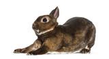 Rex Rabbit stretching against white background