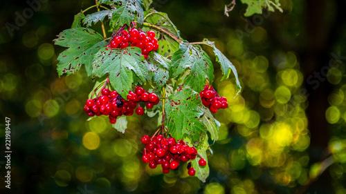 Foto Murales Baies rouges