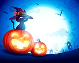 Black cat with witch hat on Halloween pumpkin in the moonlight. Jack O Lantern. - 222003011