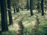 path in the forest - 222019013