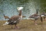 Birds near water - 222028034
