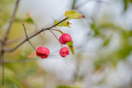 Foto Murales autumn colors