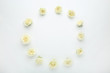 Rose flowers on white background