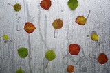 Colorful autumn season leaves on wet and rainy glass background. Selective focus used. - 222044612