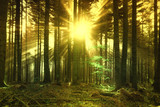 Golden sun rays Magical gold colored sun rays through forest tree landscape. trees - 222044681