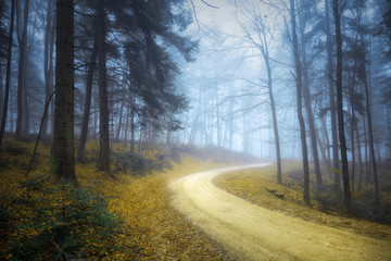 Fantasy saturated fall seasonal forest road. Magic blue foggy light in the woodland. © robsonphoto