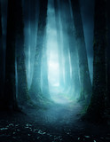 A pathway between trees leading into a dark and misty forest. Photo Composite. - 222049450