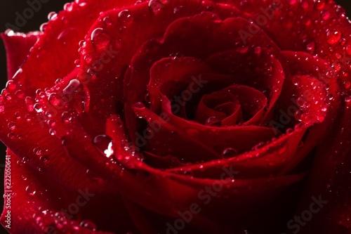 czerwona-roza-z-kropli-wody