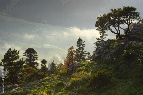 Foto Murales Mountain landscape with fog and sunlight