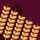 wheat spikes pattern background - 222062880