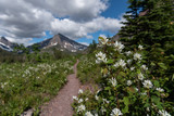 Flowers Along Trail Through Two Medicine - 222063854