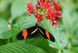 close up on beautiful butterfly on red flower