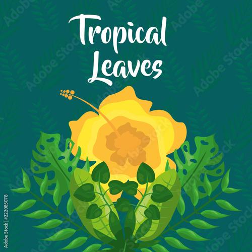 żółty kwiat egzotycznych gałęzi oddziałów tropikalnych liści