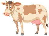 Large brown cow white background