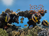 Photo of a tropical Fish on a coral reef - 222093836