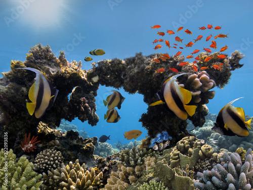 Fotografia tropikalna ryba na rafie koralowa