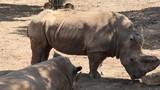 zoo safari - 222101888
