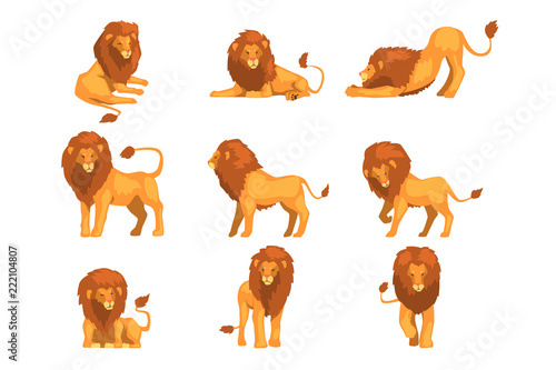 Fototapeta Proud powerful lion character in different actions set of cartoon vector Illustrations on a white background