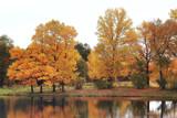 autumn landscape / yellow trees in autumn park, bright orange forest