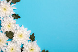 White flowers over blue background. Flat lay, top view. - 222126290