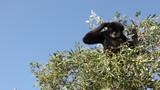 Zoo safari - 222128814