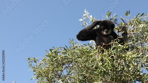 Foto Murales Zoo safari