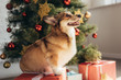 cute furry dog sitting on gift box near christmas tree