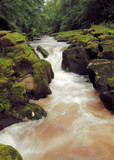 River Strid in West Yorkshire