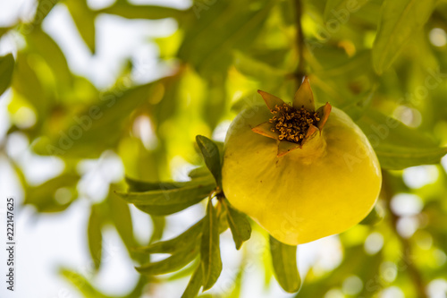 Foto Murales close up pomegranate in nature