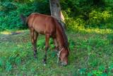 Foal in a meadow - 222148835