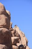 Joshua Tree National Park - 222153228