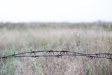 barbed metal wire stretched - 222178047